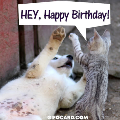 Happy Birthday Cat Gif Animation